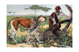 Ground-Dwelling Pata Monkey and Arboreal Red-Capped Mangabey Giclee Print by Elie Cheverlange