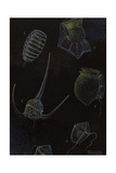 Dinoflagellates of the World Giclee Print by William H. Crowder
