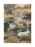 A Painting of Several Black and White Swans Giclee Print by Hashime Murayama