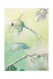 Crustacean Larvae and Other Planktonic Animals Giclee Print by William H. Crowder