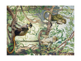 Painting of Mustache and Talapoin Guenon Monkeys in Treetops Giclee Print by Elie Cheverlange