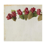 A Sprig of Coralberry Shrub Blossoms and Berries Giclée-tryk af Mary E. Eaton