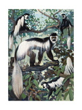 Painting of Guereza Monkeys in Treetops Giclee Print by Elie Cheverlange