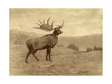 A Painting of an Irish Elk of the Pleistocene Era Giclée-tryk af Charles R. Knight