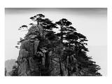Stange Pines, Huangshan, China Prints