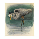 A Painting of a Great Glue Heron Hunting for Fish in Shallow Water Giclee Print by Louis Agassi Fuertes