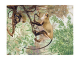 Painting of De Brazza Guenons in a Treetop Setting Giclee Print by Elie Cheverlange