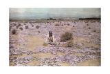 A Woman Sits Among the Carpet of Wild Flowers in Little Karoo Photographic Print by Melville Chater