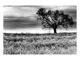 Tree in a Field, Severville, Tennessee Kunstdruck