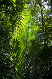 Sunlight Passing Through the Tree Canopy Backlights the Frond of a Palm Photographic Print by Jason Edwards