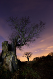 Two Large Oak Trees at Night in Richmond Park Photographic Print by Alex Saberi