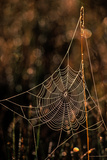 Dew on a Spider Web Photographic Print by Tom Murphy