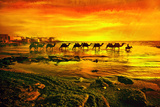 A Donkey-Led Camel Caravan Wades Off the Coast of Latakia Lámina fotográfica por Thomas Nebbia