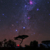 The Southern Cross and Milky Way over a Tree. the Carina Nebula Is the Red Cloud at Top Fotodruck von Babak Tafreshi