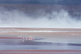Salt Dust Shrouds James' Flamingos Foraging in Laguna Colorada Photographic Print by Alex Saberi