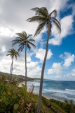 The Palm Lined and Rocky Beach at Bathsheba Photographic Print by Matt Propert