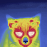 Thermal Image of a Cat Photographic Print by Tyrone Turner