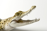 A Federally Endangered Philippine Crocodile, Crocodylus Novaeguineae Mindorensis Photographic Print by Joel Sartore