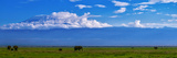 A Herd of African Elephants in a Grassland Landscape with Mount Kilimanjaro in the Distance Photographic Print by Babak Tafreshi