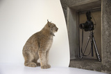A Canada Lynx Captured by a Remote Camera at the Point Defiance Zoo and Aquarium Photographic Print by Joel Sartore