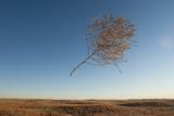 A Tumbleweed Blows Through the Air Photographic Print by Joel Sartore