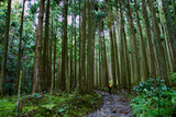 A Person Walks a Path in a Cedar Grove Near Jakkou-In Temple Photographic Print by Heather Perry