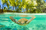 Swimming with a Green Sea Turtle and Tropical Fish at the Le Meridien Resort Photographic Print by Mike Theiss