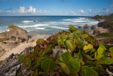 The Rocky Beach at Bathsheba Photographic Print by Matt Propert