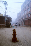 A Street Dog Watches Pedestrians on a Katmandu Street Photographic Print by David Edwards