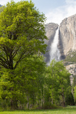 Yosemite Falls, Yosemite National Park, California Photographic Print by Greg Winston