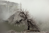 A Tree Coated in Heavy Ice Next to Niagara Falls Photographic Print by John Cancalosi