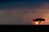 A Silhouetted Acacia Tree on a Savanna at Sunset, with a Rain Storm in the Distance Photographic Print by Bob Smith