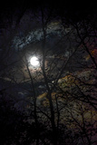 The Full Moon Creates Rainbows in the Clouds, Seen Through Silhouetted Tree Branches Photographic Print by Amy White and Al Petteway