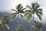 Palm Trees on Moorea Island Photographic Print by Andy Bardon