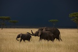 A Small Family of Elephants Moves across the Plains of the Serengeti Photographic Print by Michael Nichols