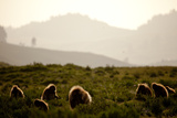 A Group of Gelada Baboons Backlit by the Late Evening Sun Photographic Print by Robin Moore