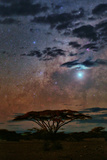 The Milky Way and Planet Venus over an Acacia Tree in the Evening Fotografisk tryk af Babak Tafreshi