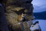 A Remote Camera Captures a Cougar on a Rock Outcrop in Wyoming's Bridger Teton National Forest Photographic Print by Steve Winter