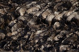 A Wildebeest Herd Migrates across the Mara River in Serengeti National Park Photographic Print by Michael Nichols