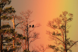 A Pair of Bald Eagles, Haliaeetus Leucocephalus, Illuminated by a Rainbow While Perched in a Tree Photographic Print by Robbie George