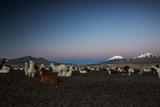 Llamas Settle Own to Sleep Near Volcano Nevado Parinacota in Sajama National Park at Dusk Photographic Print by Alex Saberi