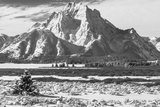 A Black and White Photograph of Mount Moran in the Teton Mountains in Winter Photographic Print by Greg Winston
