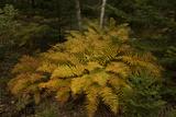Foliage Near Southwest Harbor Photographic Print by Richard Olsenius