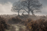 A Red Deer Stag Makes His Way Through a Misty Landscape in Richmond Park Photographic Print by Alex Saberi