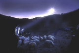 Shepherds Tend to their Flocks Beneath the Light from a Bright Star Photographic Print by Thomas Nebbia
