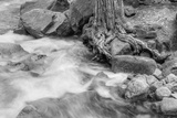 Water Flowing Near Weathered Tree Roots Photographic Print by Greg Winston
