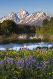 Wildflowers Blooming in Spring, Near the Base of the Teton Range Photographic Print by Robbie George