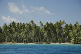Palm Trees in the French Polynesian Atoll of Ahe Photographic Print by Andy Bardon