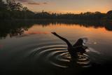 A Black Swan, Cygnus Atratus, Stretching at Sunrise in Ibirapuera Park Photographic Print by Alex Saberi