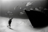 An Underwater Photographer Explores a Shipwreck as Caribbean Reef Sharks Circle Nearby Fotografisk tryk af Jennifer Hayes